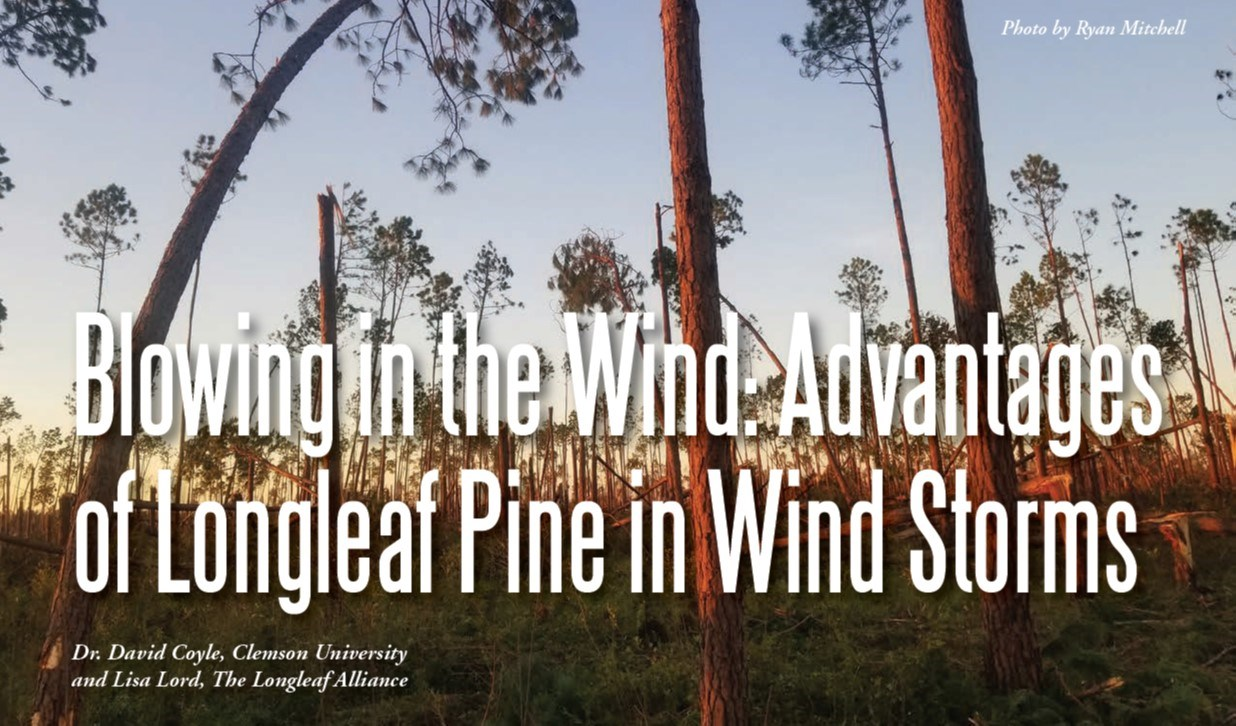 LLP Windstorm Fact Sheet 2020 Front Cover